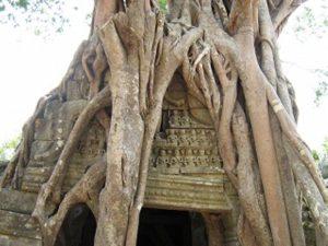 ガジュマルの木に呑み込まれた遺跡